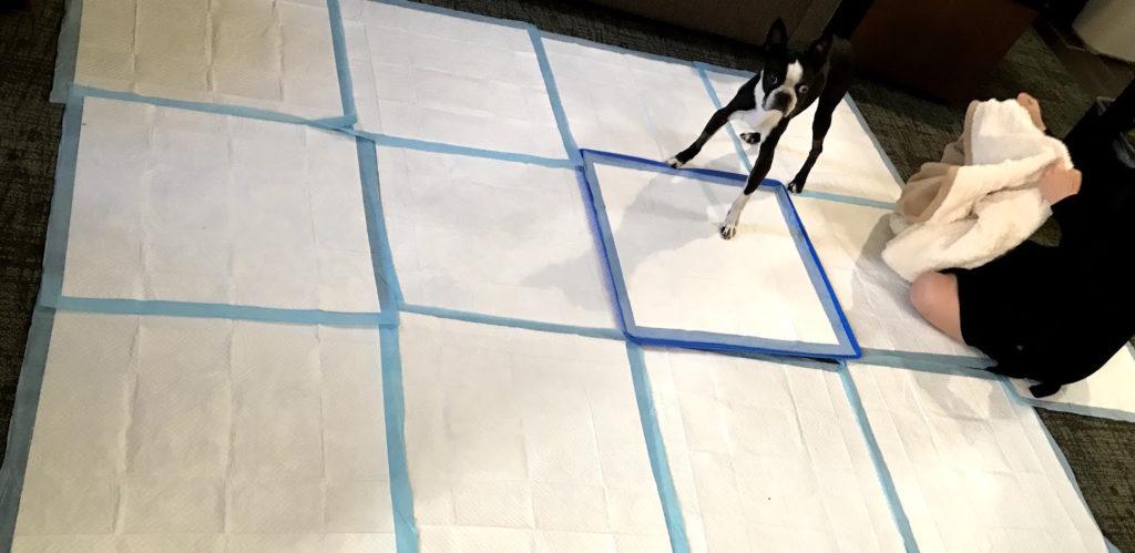 Urine In Carpet Health Risks Carpet Vidalondon